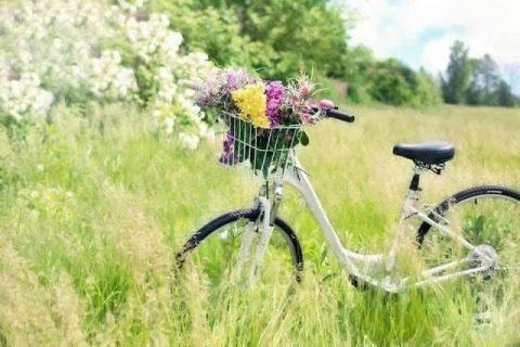 自転車保険加入義務化|楽天超簡単保険でオトクに対応