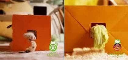 猫バンバンそっくり⁉#キャベバンバンの動画検証。