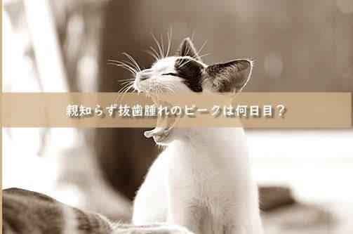 横向き埋没の親知らず抜歯 翌日~3日目:腫れがピーク(写真あり)