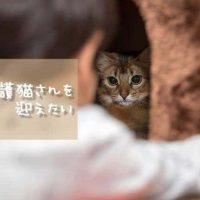 猫の里親になるなら里親サイト?譲渡会?保護猫カフェ?