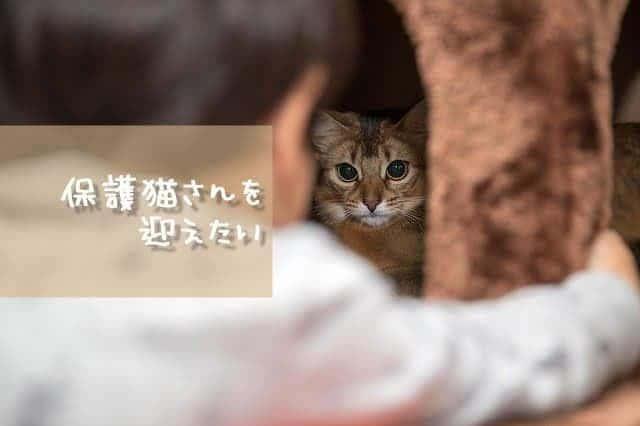 猫の里親になりたい*どの方法がいいの?