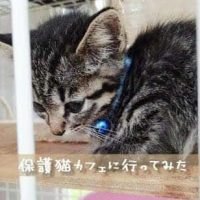 大阪十三保護猫カフェねこの木*行ってみた