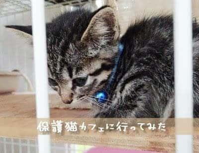猫の里親になれる大阪十三の保護猫カフェ「ねこの木」レポ