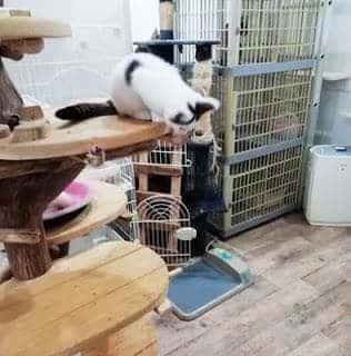 大阪の保護猫カフェ「譲渡型猫カフェ ねこの木」猫ブースの様子