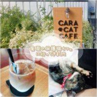 箕面の保護猫カフェ「Cara Cat Cafe」里猫たちとまーったり