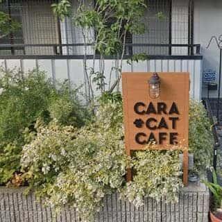 Cara Cat Cafeの看板を発見!