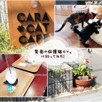 箕面*保護猫カフェCaraCatCafe