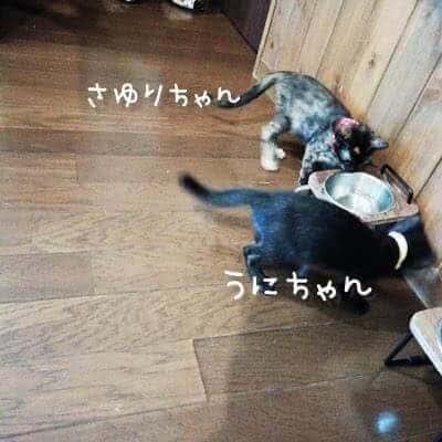 アラフォー二人暮らし夫婦が子猫の里親に!里猫お迎え決定