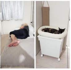 眠る猫と夫