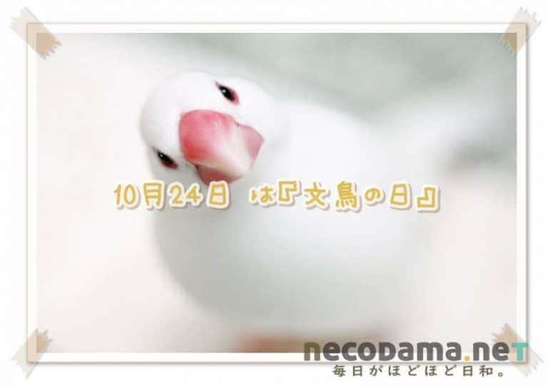 10月24日は文鳥の日!? 手に幸せ。ツイッターの限定タグが可愛い