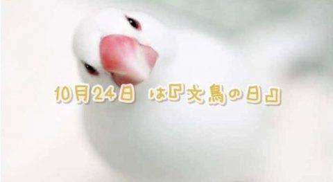 10月24日#文鳥の日*かわいいツイート