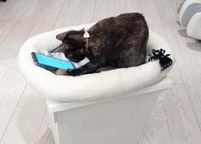 猫 スマホで遊ぶ
