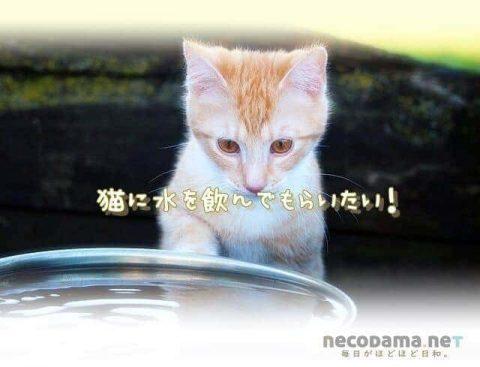 水を飲まない猫*飲むようになった方法