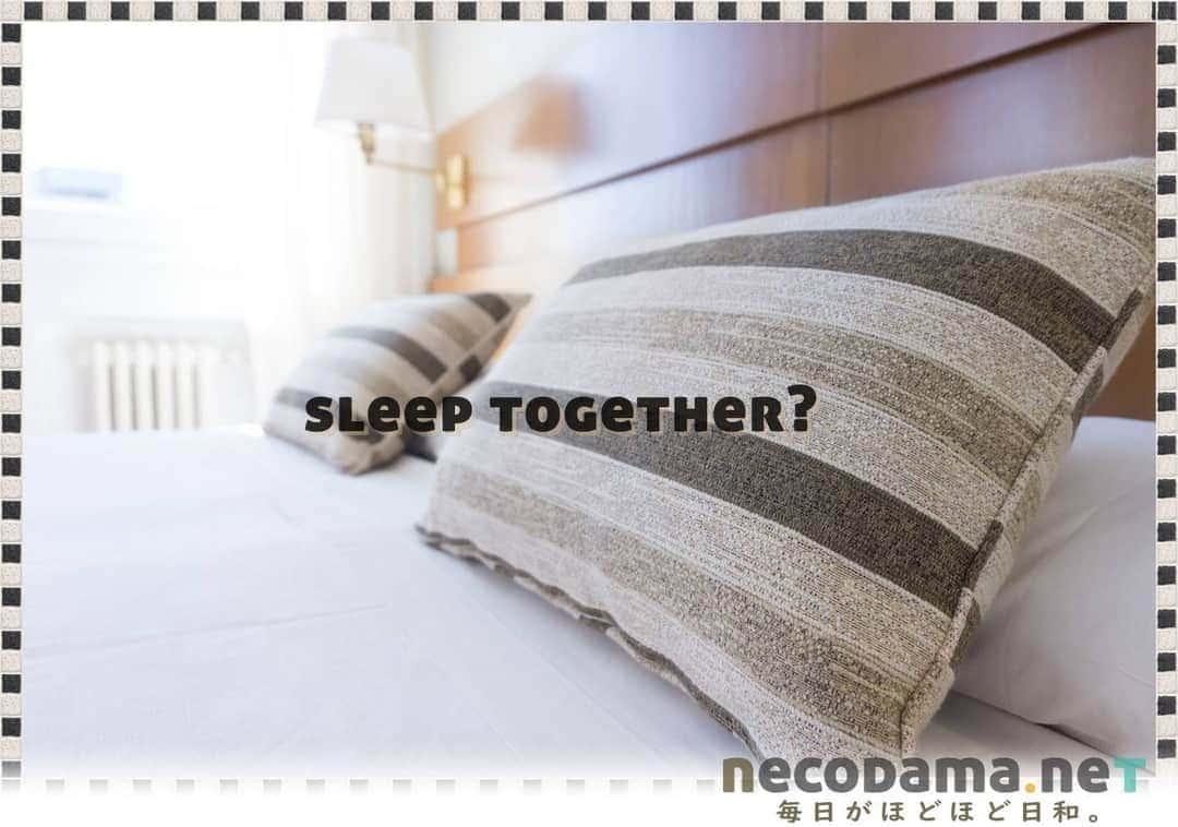ベッドは別々?一緒? アラフォー二人暮らし夫婦のベッド選び。