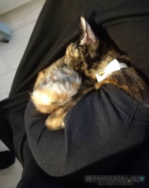 子猫の避妊手術~抜糸の体験談:かかった費用・時期・術後服は?
