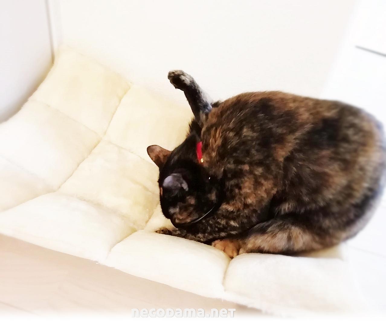 木製猫ベッド*床置きハンモックの感想