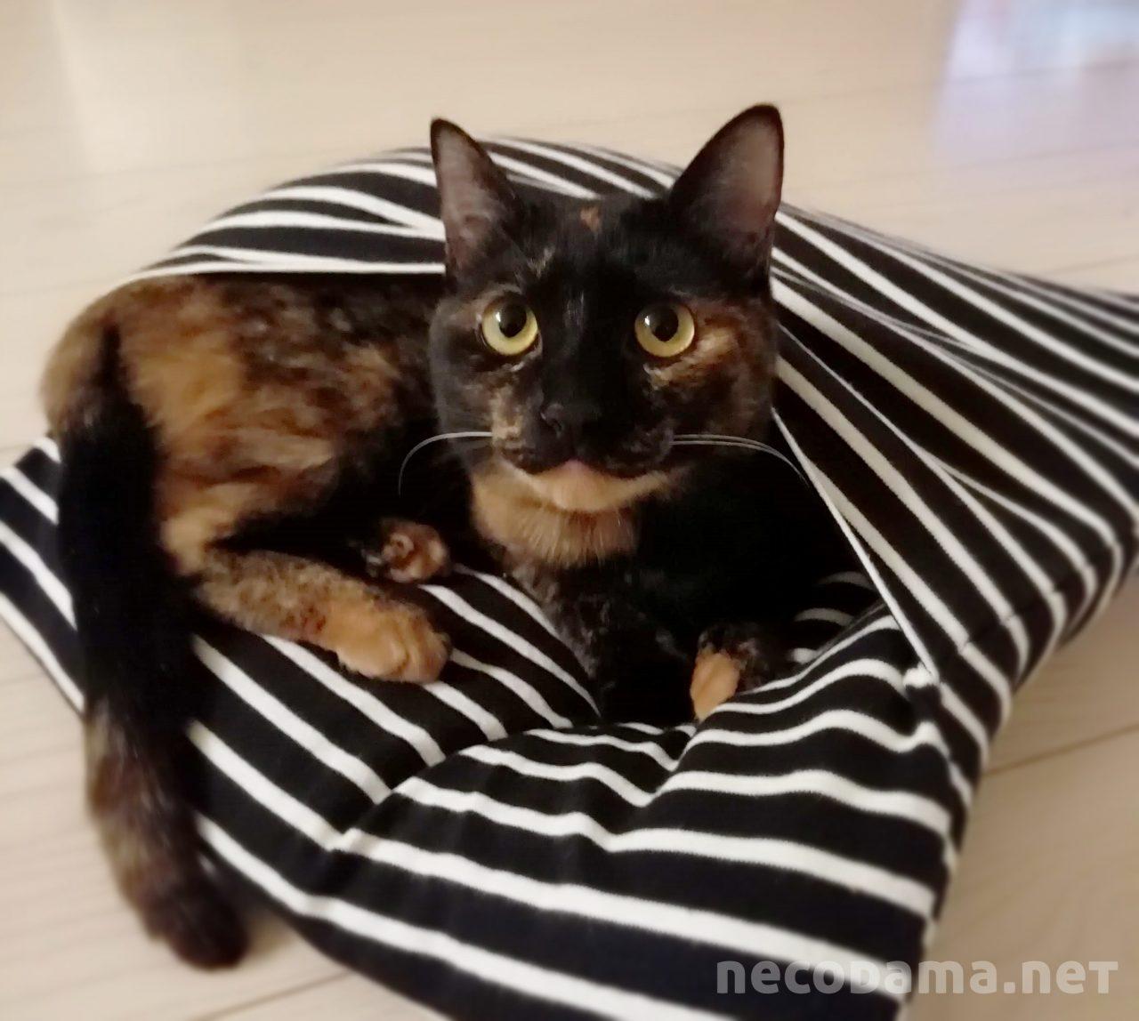 猫1匹飼う費用はいくら?毎月と年間かかる費用