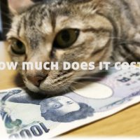 猫1匹を飼うといくらかかる?1ヶ月、年間の飼育費用まとめ