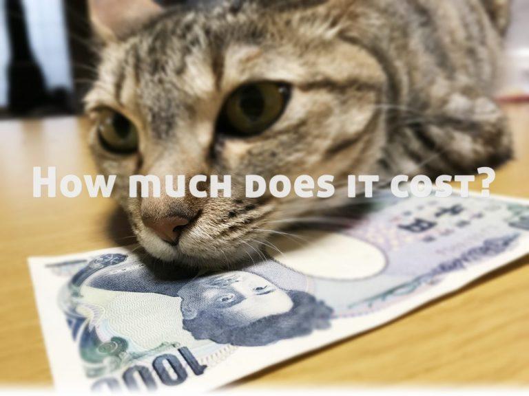 猫1匹飼う費用は?*1ヶ月/年間まとめ