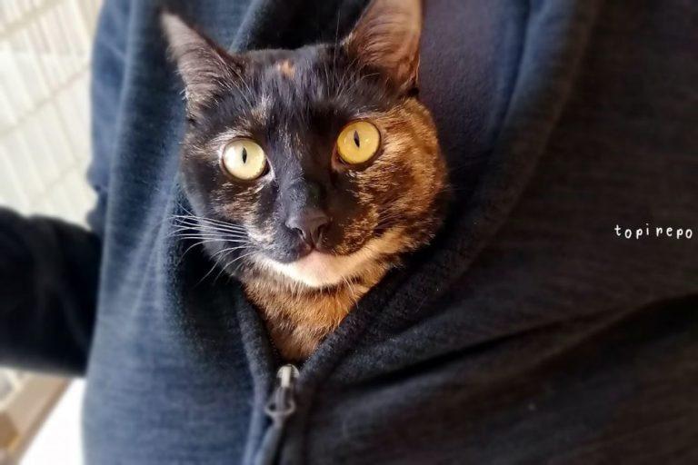 夫の部屋着にもぐる猫
