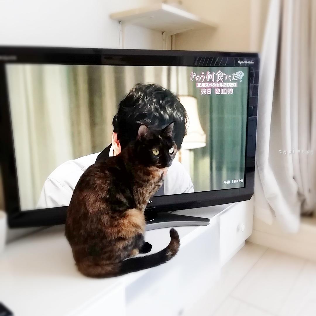 お猫さま、シロさんが見えませんよ。