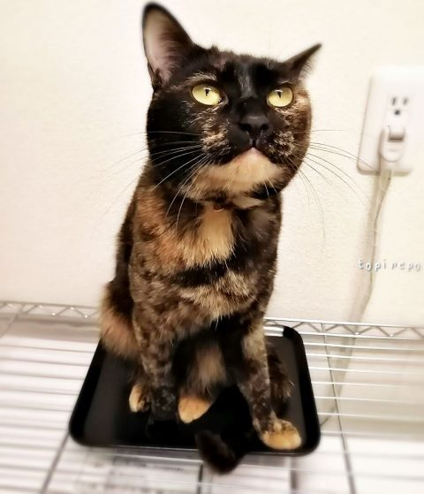 盆に乗る猫
