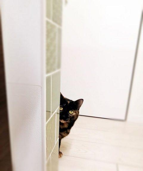 ひょっこりはん的(・・・古ぃけど)なのぞき猫