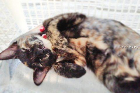 猫暮らし2年*子猫可愛い♡《~0.5歳》