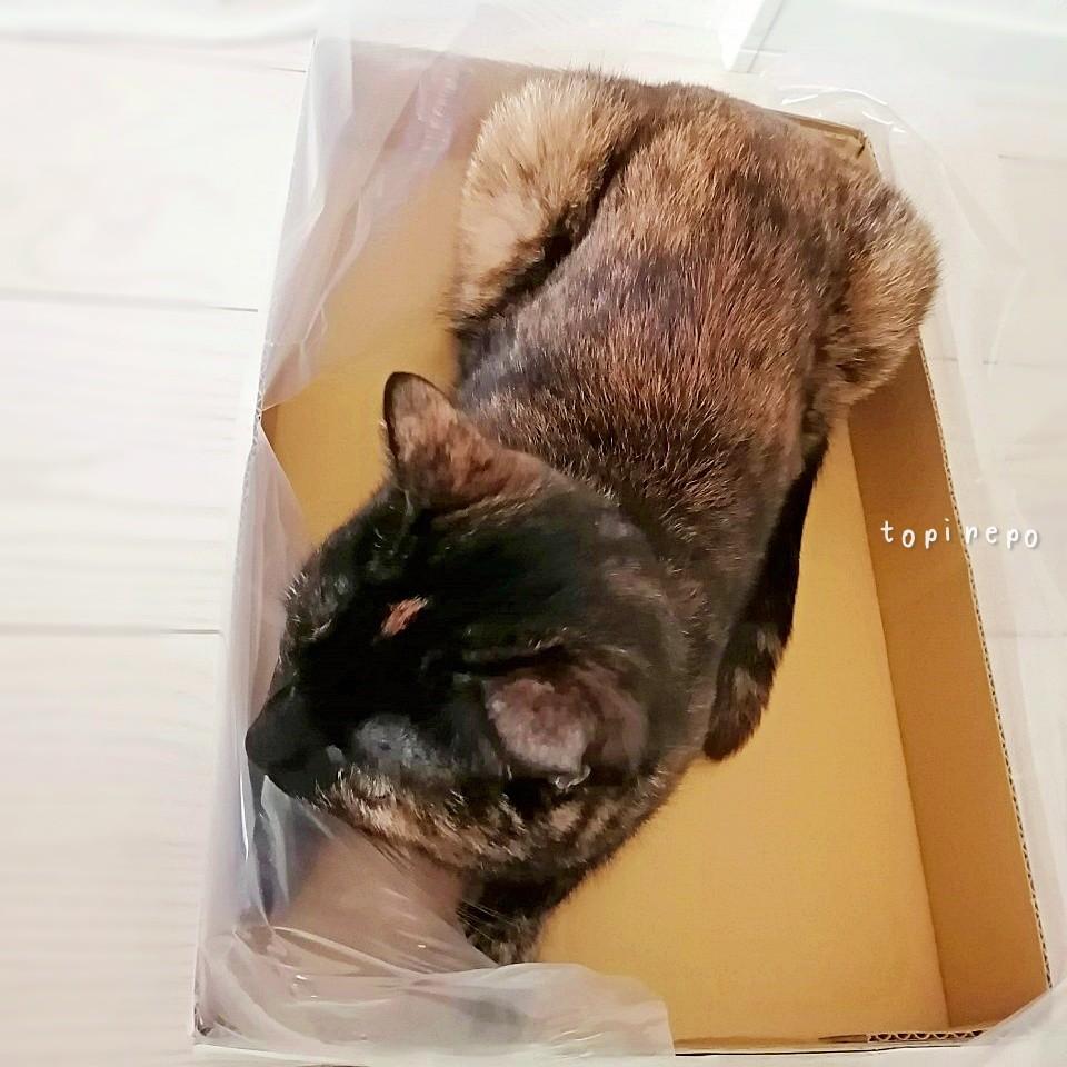 入居先の「ペット飼育申請書」を提出