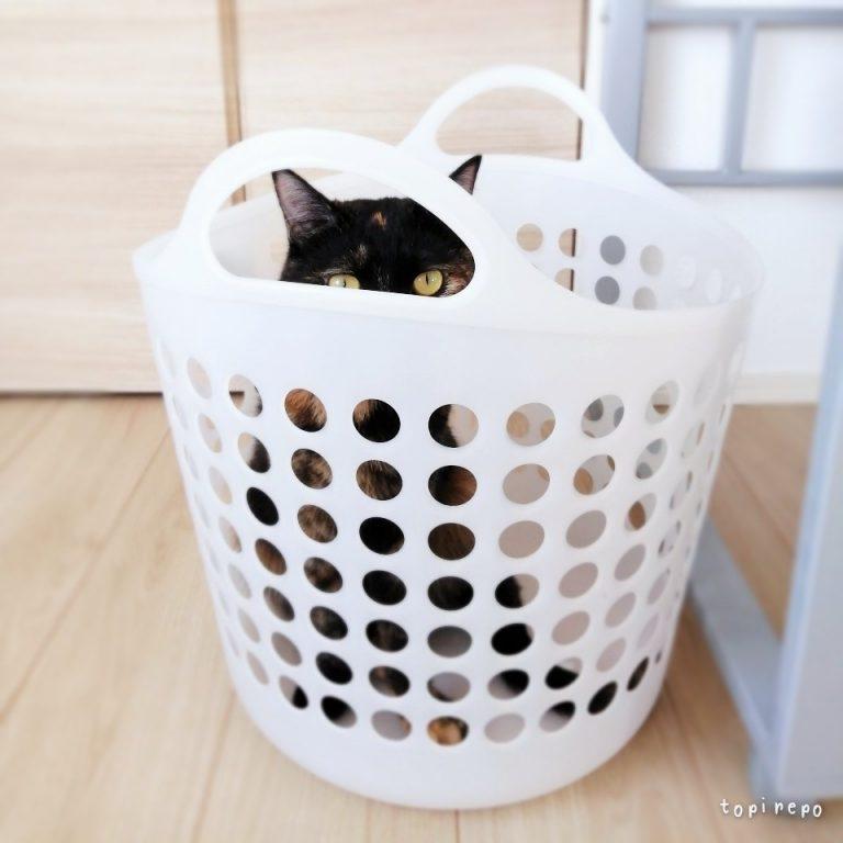 隠れてるつもり・・・なのか?