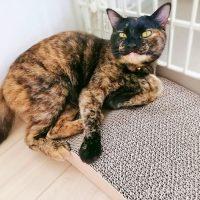 お猫さまに床置きタイプの爪とぎを購入。