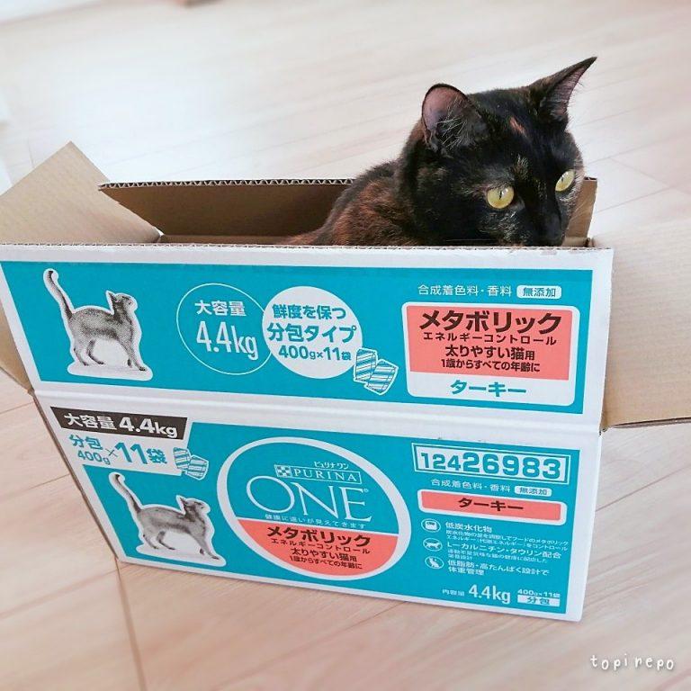 🐾そこに箱があるから入る猫