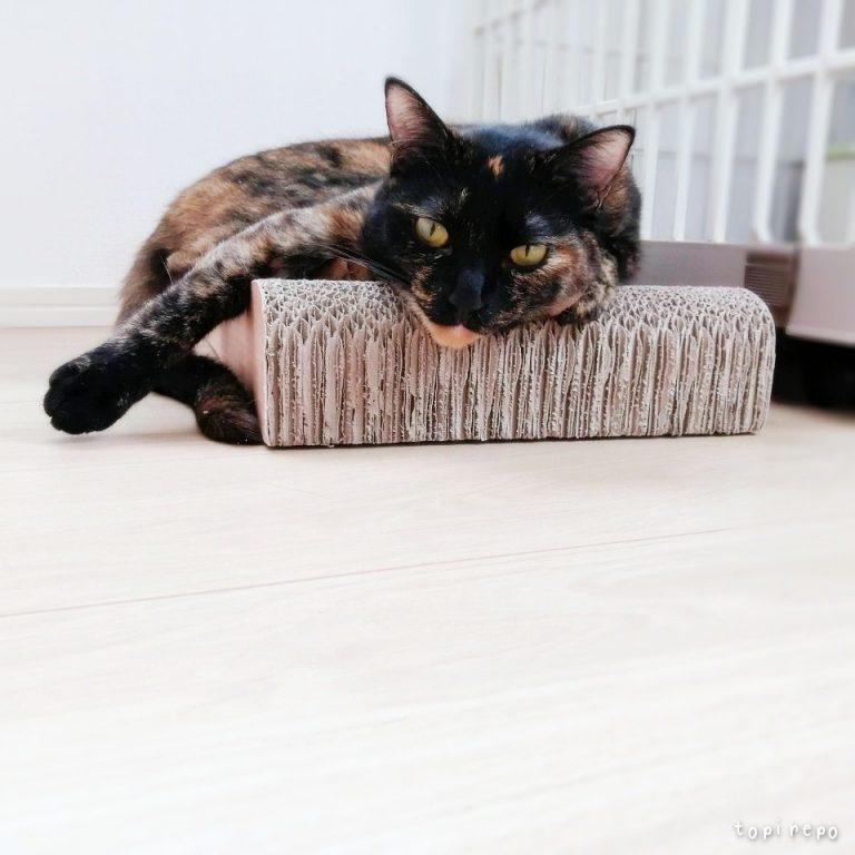 起きてる時間の9割はだら猫です