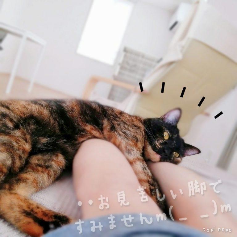 お見苦しい脚ですみませんm(_ _)m