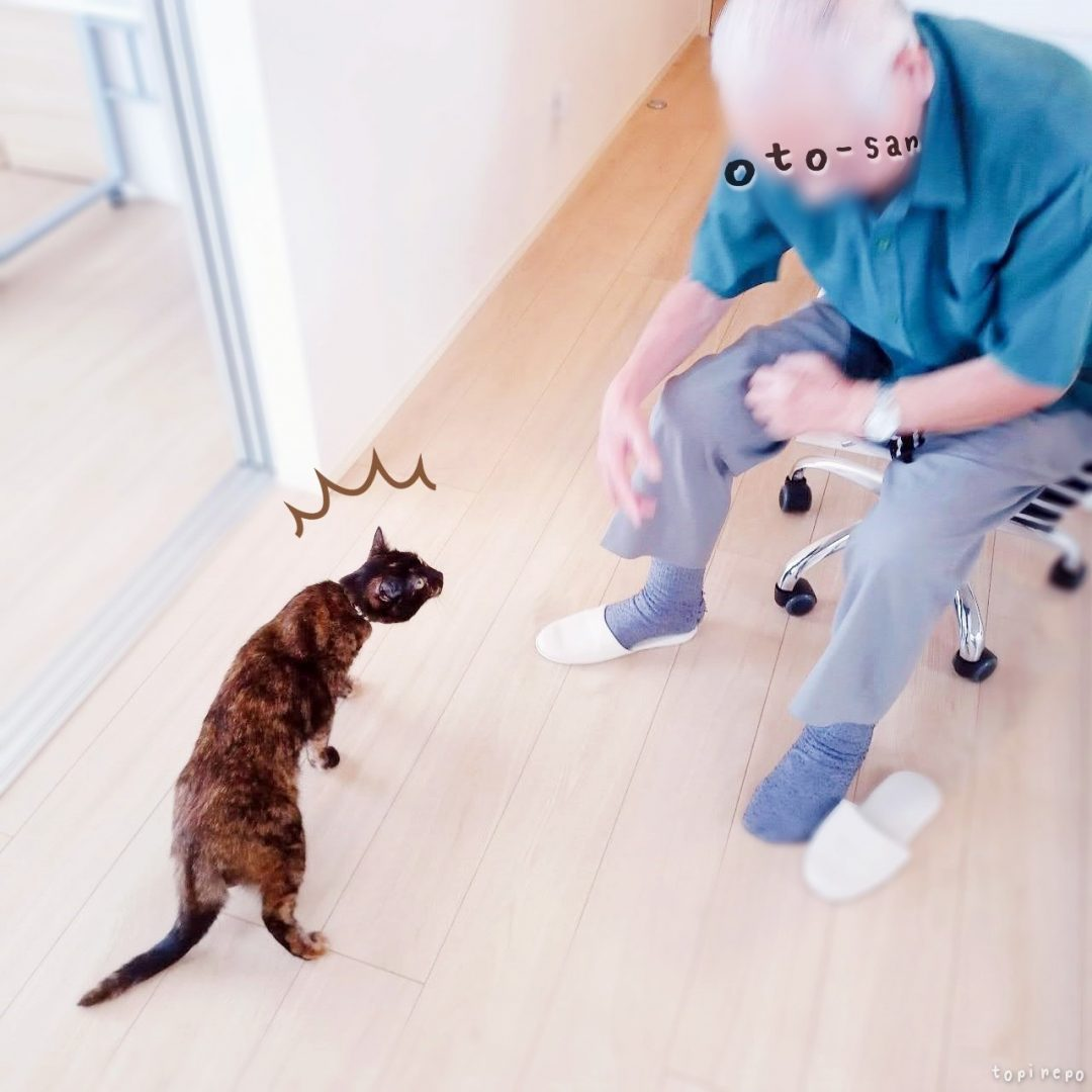 お義父さんが来た*老人と若猫のご対面