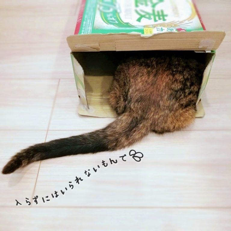 だってそこに箱があるから。