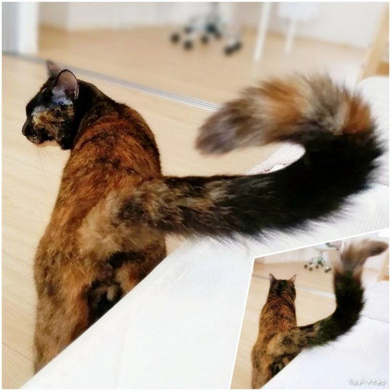 尻尾が勇ましいうちの猫