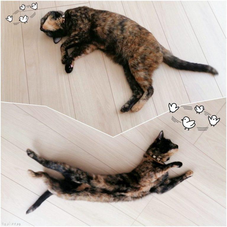 床でゴロゴロしてクールダウンする猫