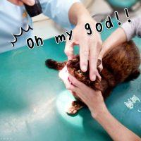 お猫さま2歳の予防接種(ワクチン)体験録