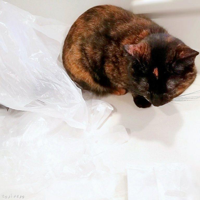 レジ袋にまみれる猫。