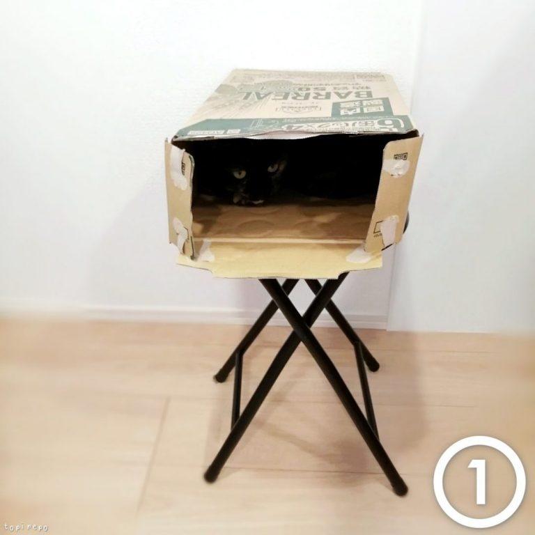 ビール箱に入る猫