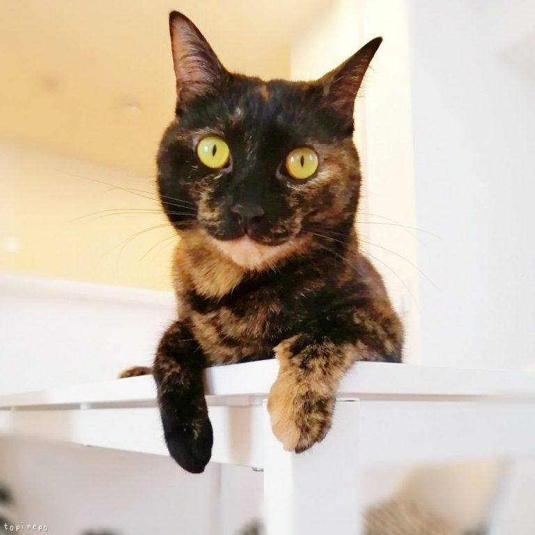 食卓でくつろぐ猫
