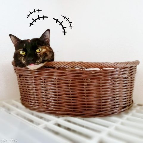 かごにあごを乗せる猫