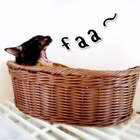 のんきにあくびする猫