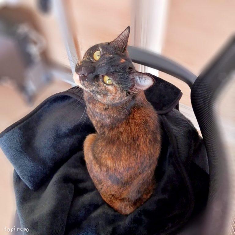人間(のひざ)がもどってくるのを待っている猫