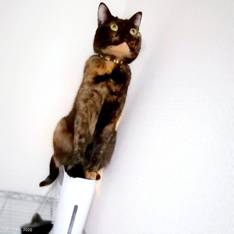 気をつけ!する猫