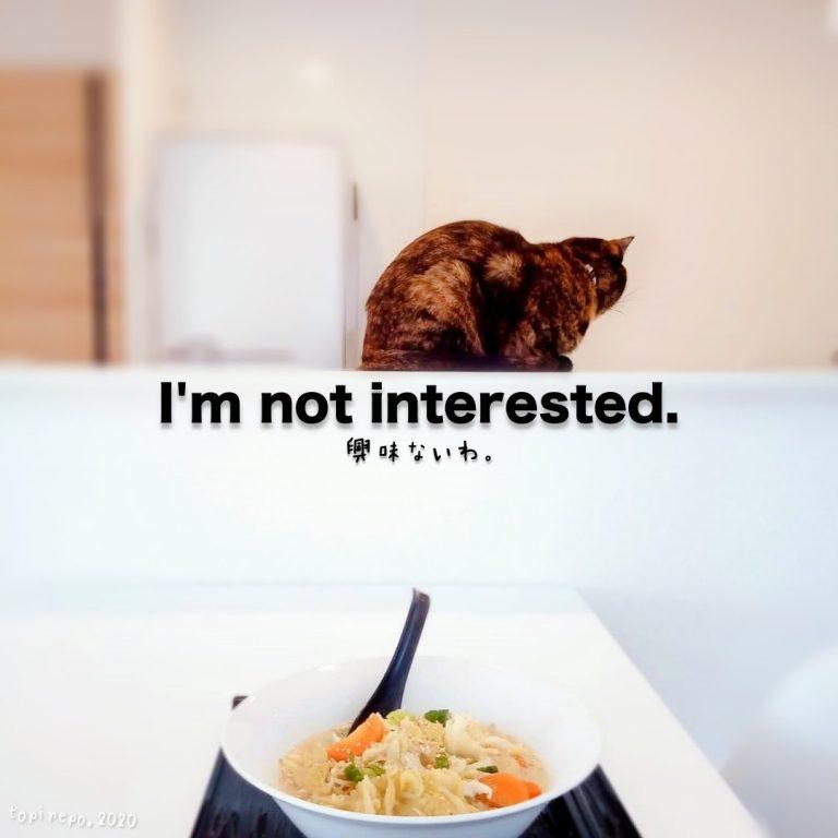 ラーメンに興味の無い猫