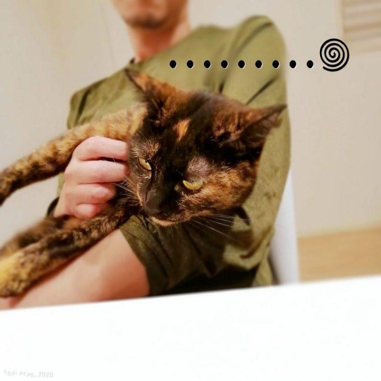 オットに抱かれて嫌そうな猫
