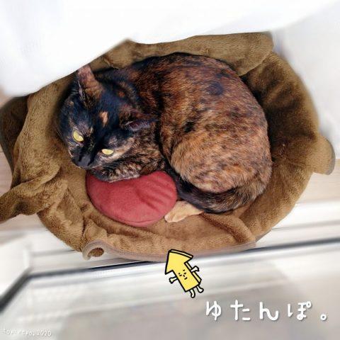 猫ベッドにミニ湯たんぽを置いてあげた。