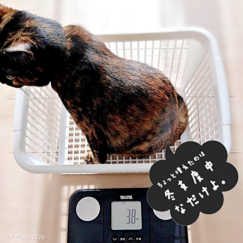 猫も冬支度中。てっちゃんの体重測定
